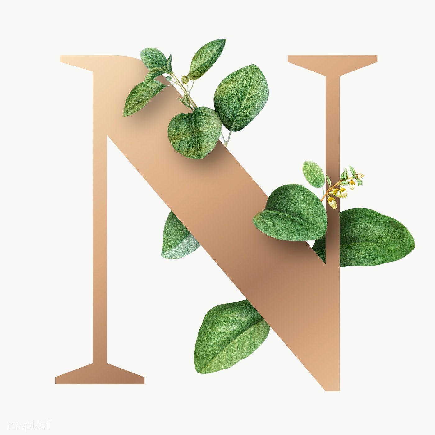 Botanical Capital Letter N Transparent Png Premium Image By Rawpixel Com Aum Alphabet Wallpaper Lettering Alphabet Fonts Floral Letters