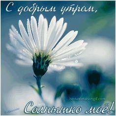 S Dobrym Utrom Solnyshko Moyo Animacionnye Kartinki I Gif