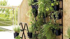 J'adore cette photo de @decofr ! Et vous ? (Source : http://www.deco.fr/photos/diaporama-un-mur-vegetal-a-l-exterieur-d_1803)