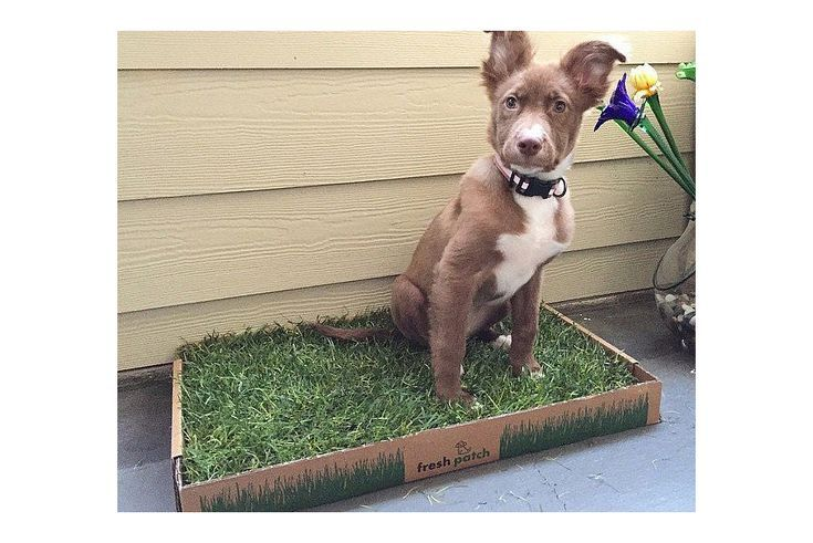 How To Make Apartment Balconies Dog Friendly Dog Friendly Apartments Dog Potty Patch Dog Potty