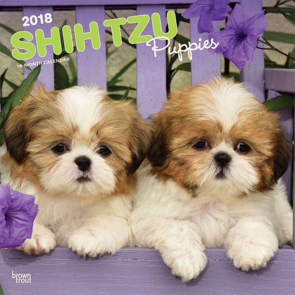 Shih Tzu Puppies Wall Calendar Shih Tzu Puppy Puppies Shih Tzu