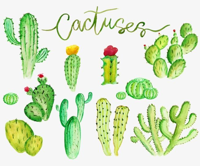 Cactus Plant Hand Painted Png Transparent Image And Clipart For
