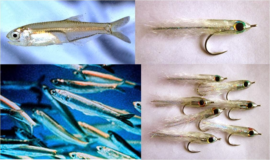 Step-by-Step Tying Slinky Anchovy Fly (With images)   Fish