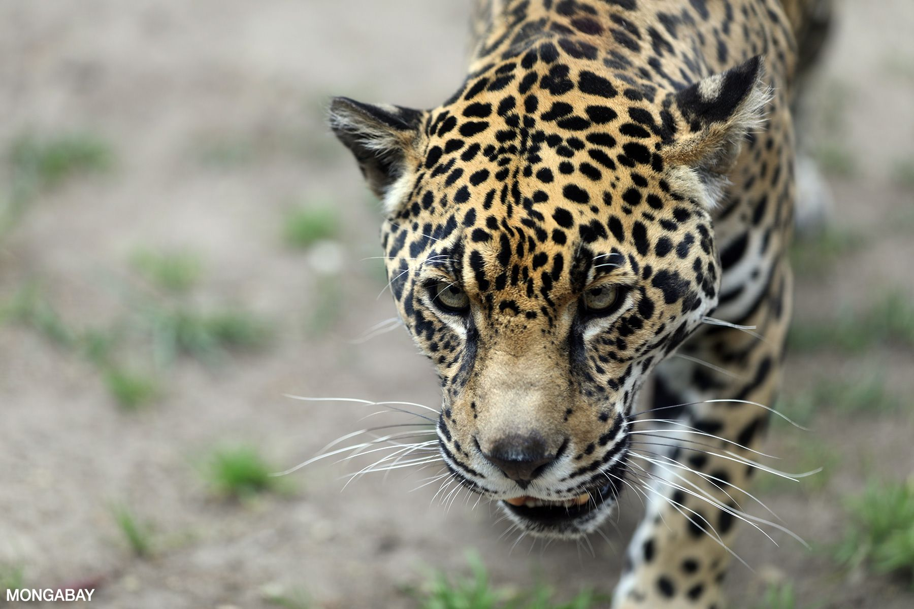 Information about wildlife in the Amazon Rainforest in