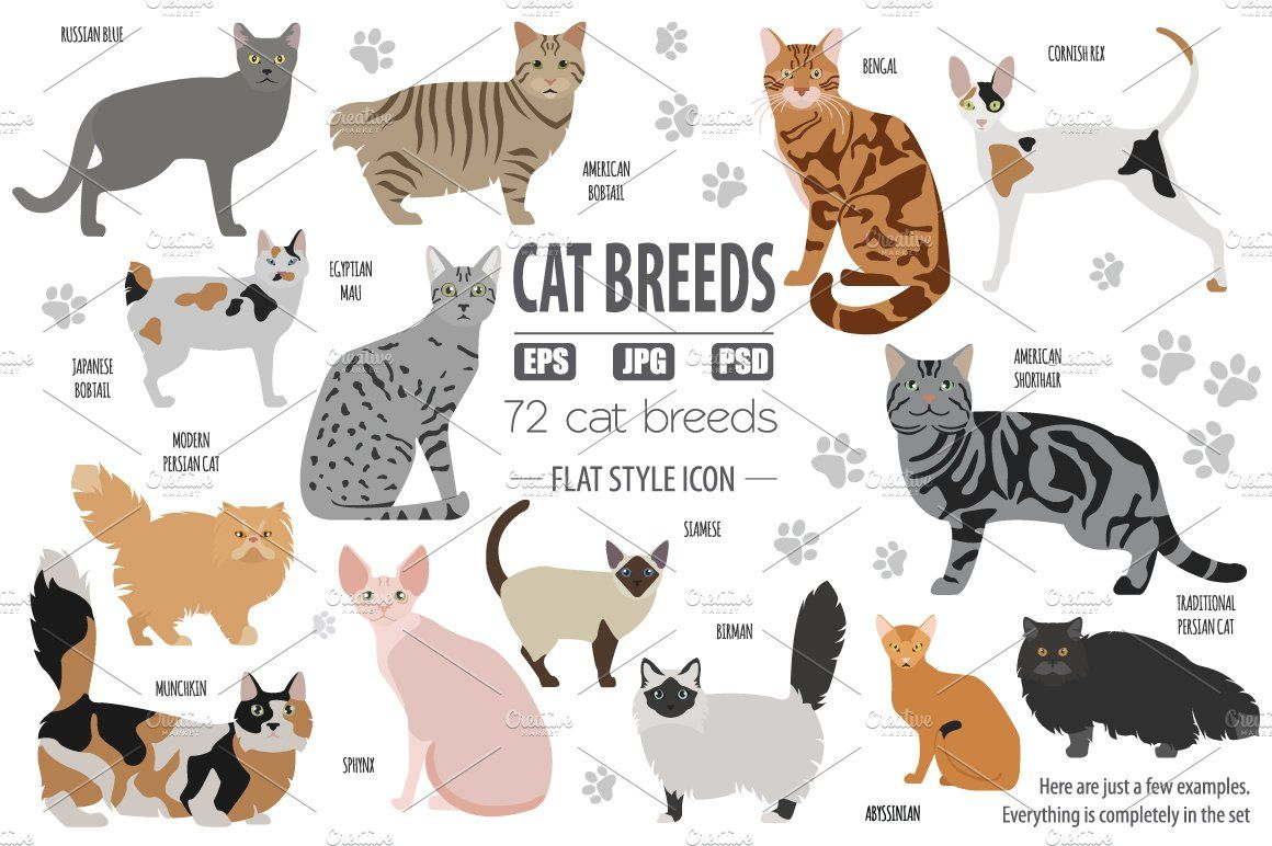 All World Cat Breeds In One Set By A7880s Design Shop On Creativemarket World Cat Cat Breeds Asian Cat