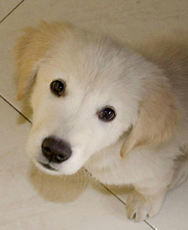 Te Ellent Tudsz Neki Allni Big Puppies Puppy Dog Eyes Dog