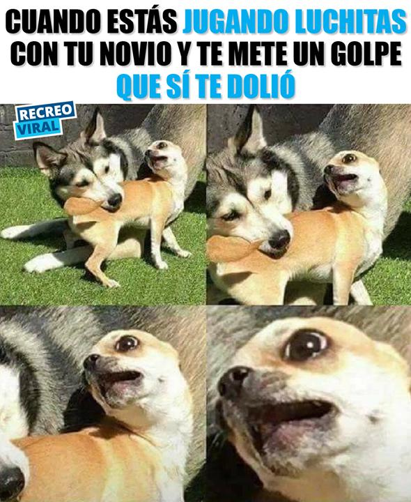 Oye No Seas Tan Rudo Conmigo Memescan Tstoplaughing Animal Memes Fake History Memes Funny Animal Memes