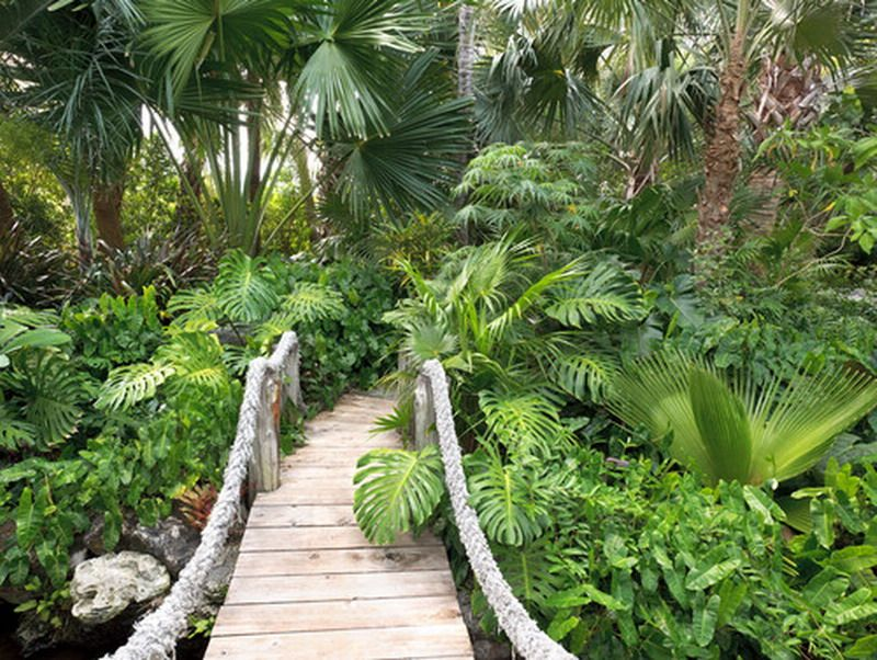 Natural Tropical Palm Tree Garden Patio Landscape