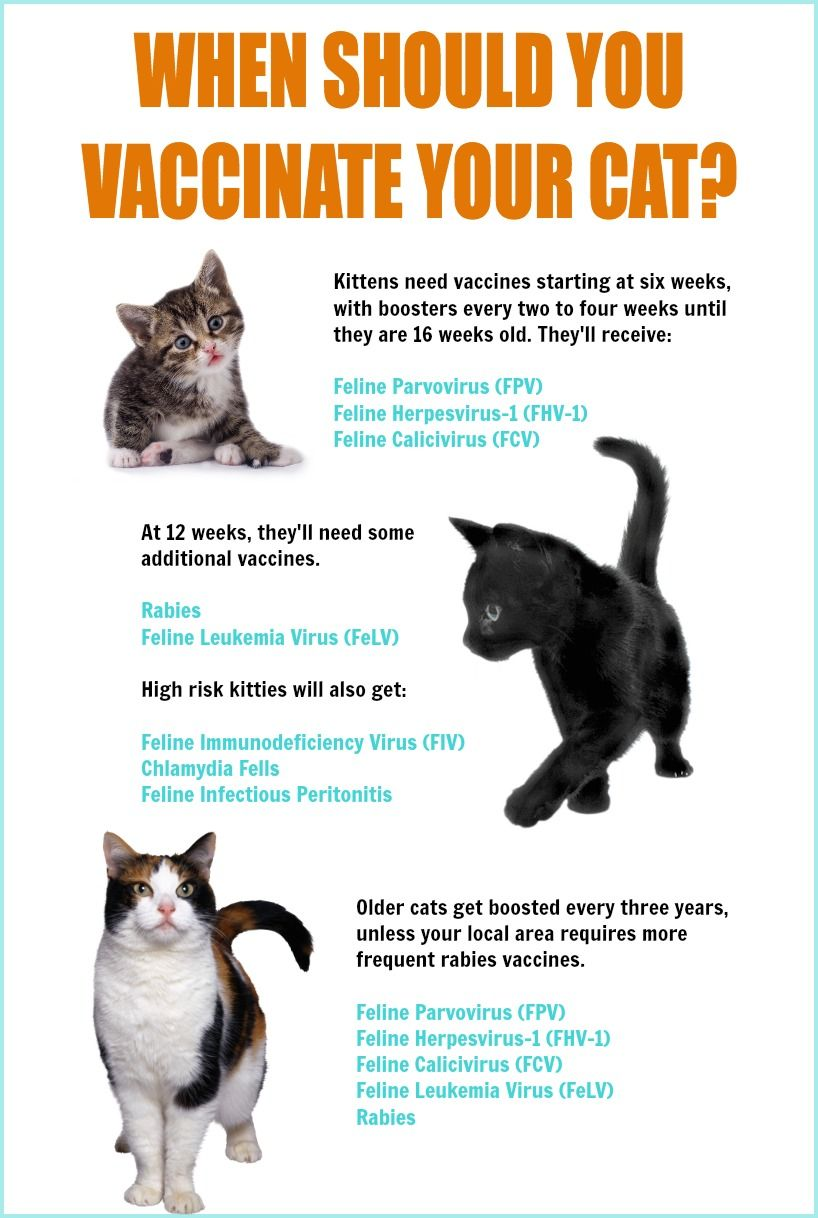 Pin By Catgenie On For Pet Parents Cats Pets Travel