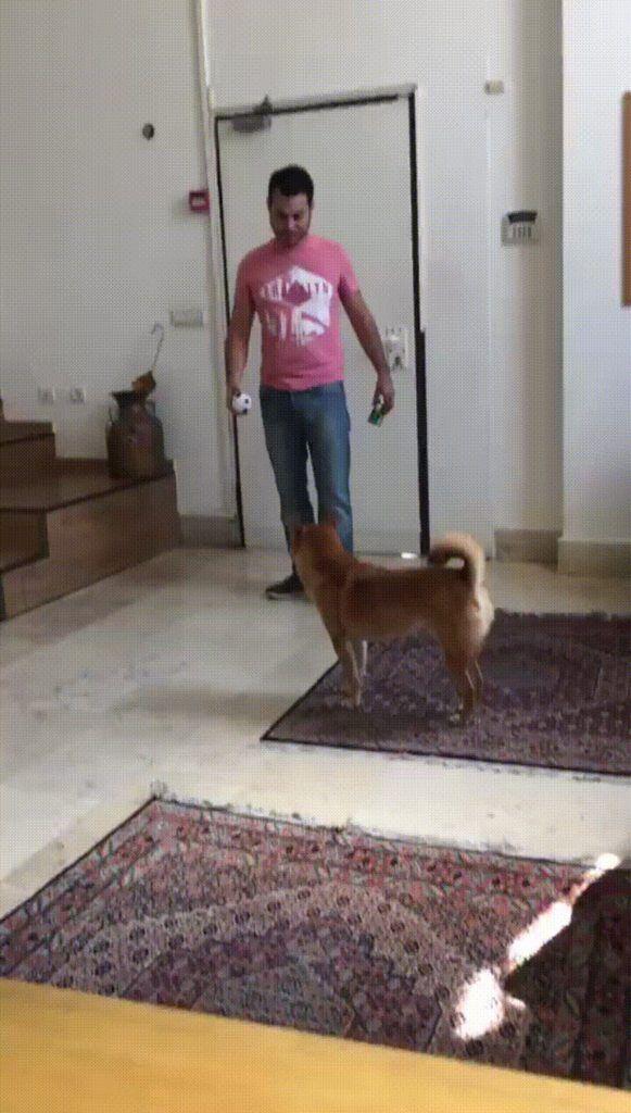 Most playful dog i've ever seen