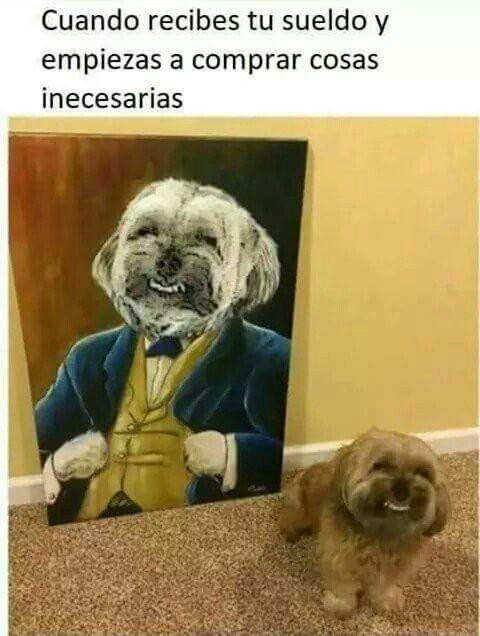 Pin De Anabel En Memes Memes Divertidos Sobre Perros Mascotas Memes Imagenes Divertidas