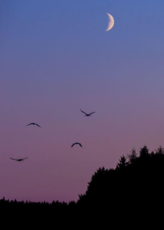 "milamai:  ""pastel flight  """