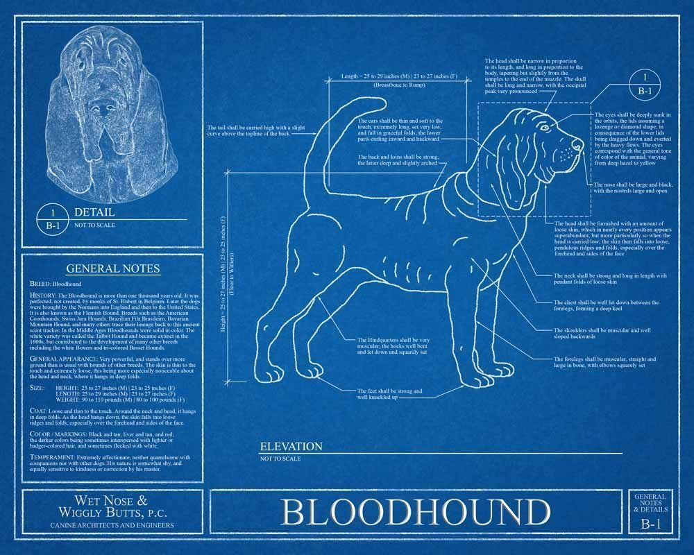 Bloodhound blueprint this bloodhound blueprint is a wonderful piece bloodhound blueprint this bloodhound blueprint is a wonderful piece of art that will make a malvernweather Image collections