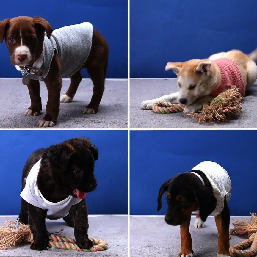 Sweaters  Upcycled Dog Sweaters Informations About Upcycled Dog Sweaters Pin You can easily use my profile to examine different pin types Upcycled Dog Sweaters pins are a...