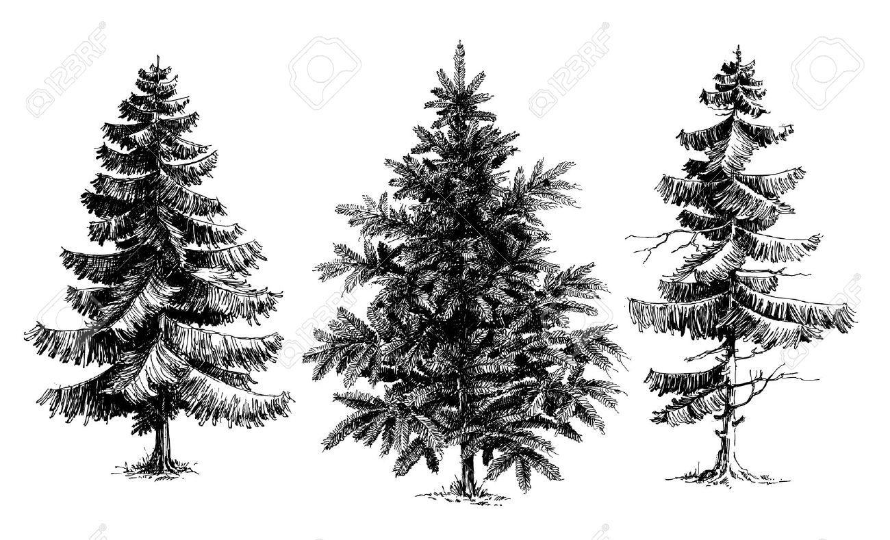Pencil sketch pine trees christmas trees realistic hand drawn vector set