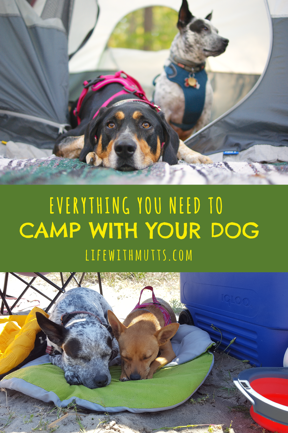Photo of You love to go on adventures with your dog and want to camp with them, but you don't … – Camping