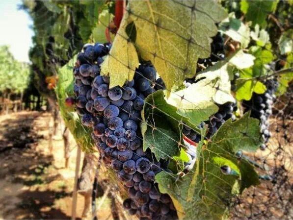 Del Valle de Guadalupe, Ensenada, Baja California, tierra de excelentes Vinos mexicanos !