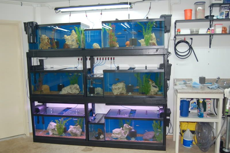 Astonishing Air Pump Setup Black Wood Stand Rack Fishrooms Download Free Architecture Designs Scobabritishbridgeorg