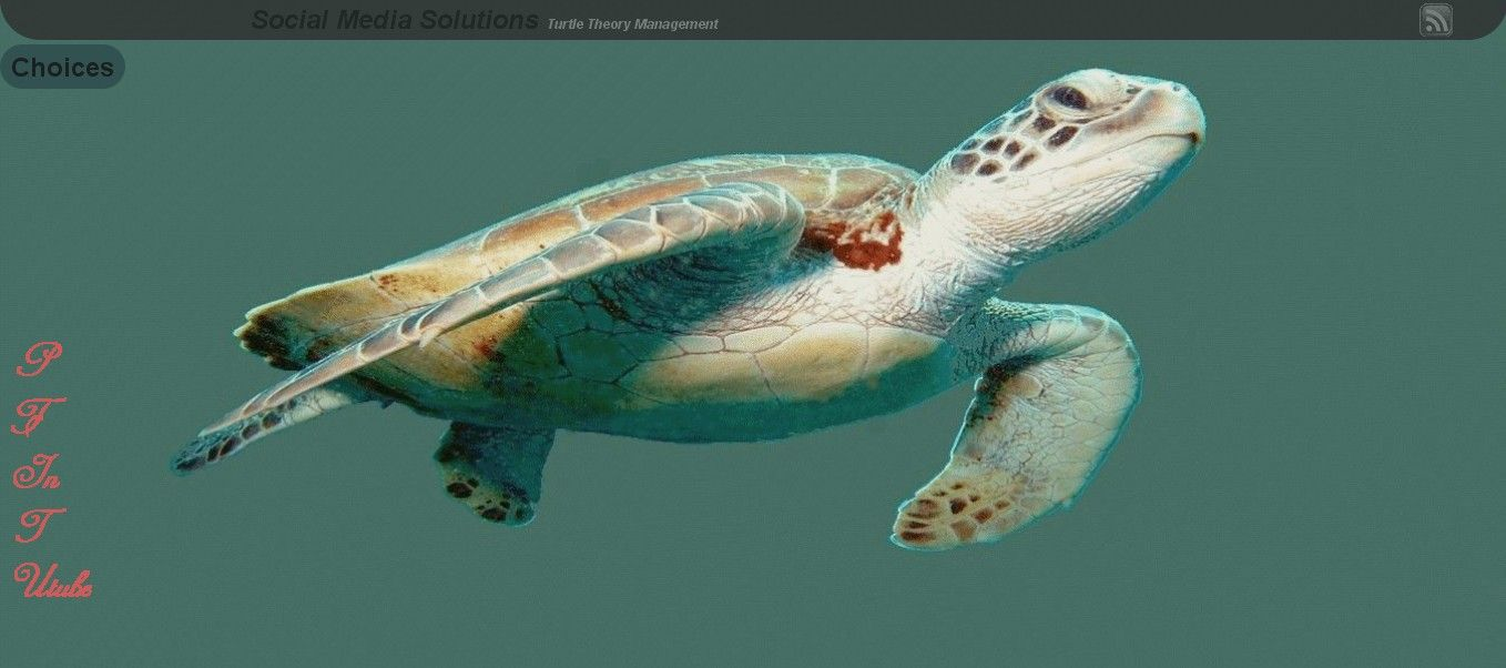 Turtle Theory Management Social Media Solutions http://netdatabiz.com