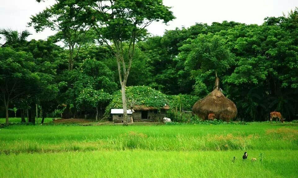 Gram bangla bangladesh pinterest for Bangladeshi house image