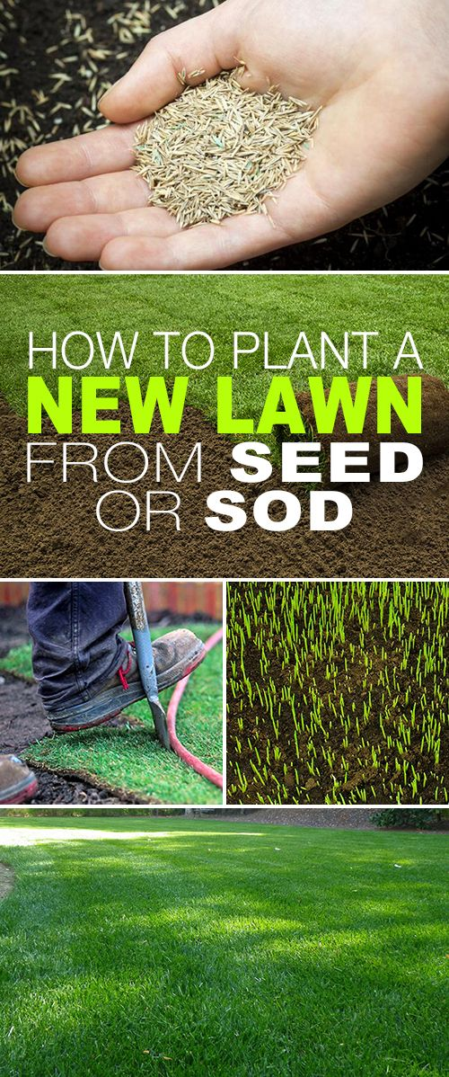 How To Plant A New Lawn From Seed Or Sod The Garden Glove Growing Grass Diy Lawn Seeding Lawn