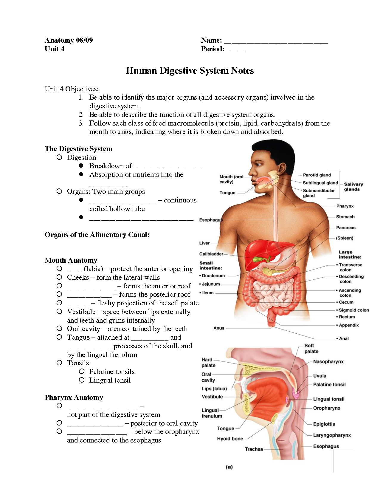 Internal Anatomy Chart Organs of Human Body | www.sinoalgerie.com ...