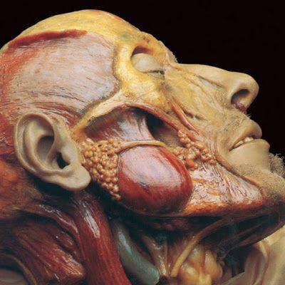 Lymphatic Phlegm