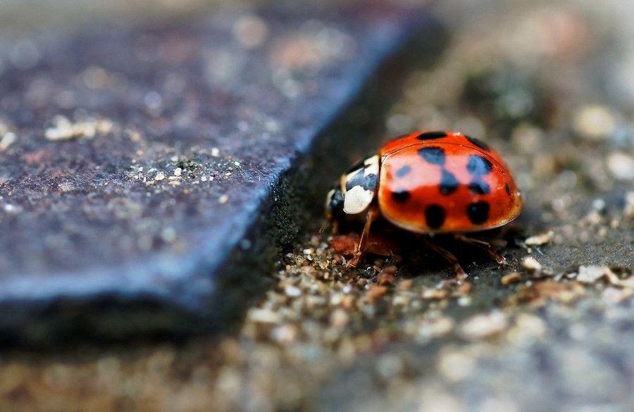 Google Image Result for http://cdn.c.photoshelter.com/img-get/I000026D9Tuw_DQo/s/900/900/ladybird-ladybug-nature-natural-world-macro-close-up-red-man-vs-nature-colour-photo.jpg
