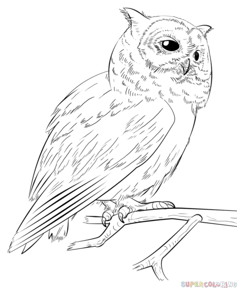 How to draw a realistic owl step by step. Drawing