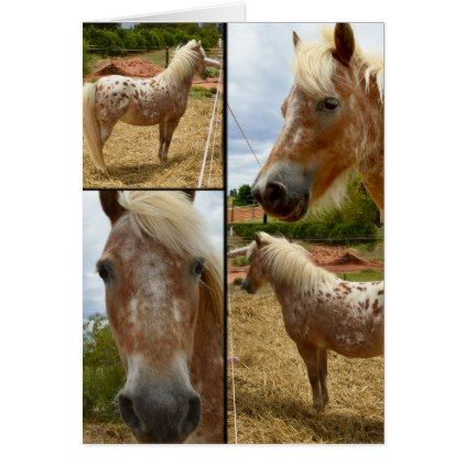 Appaloosa Horses Photo Collage Greeting Card - photo gifts cyo photos personalize