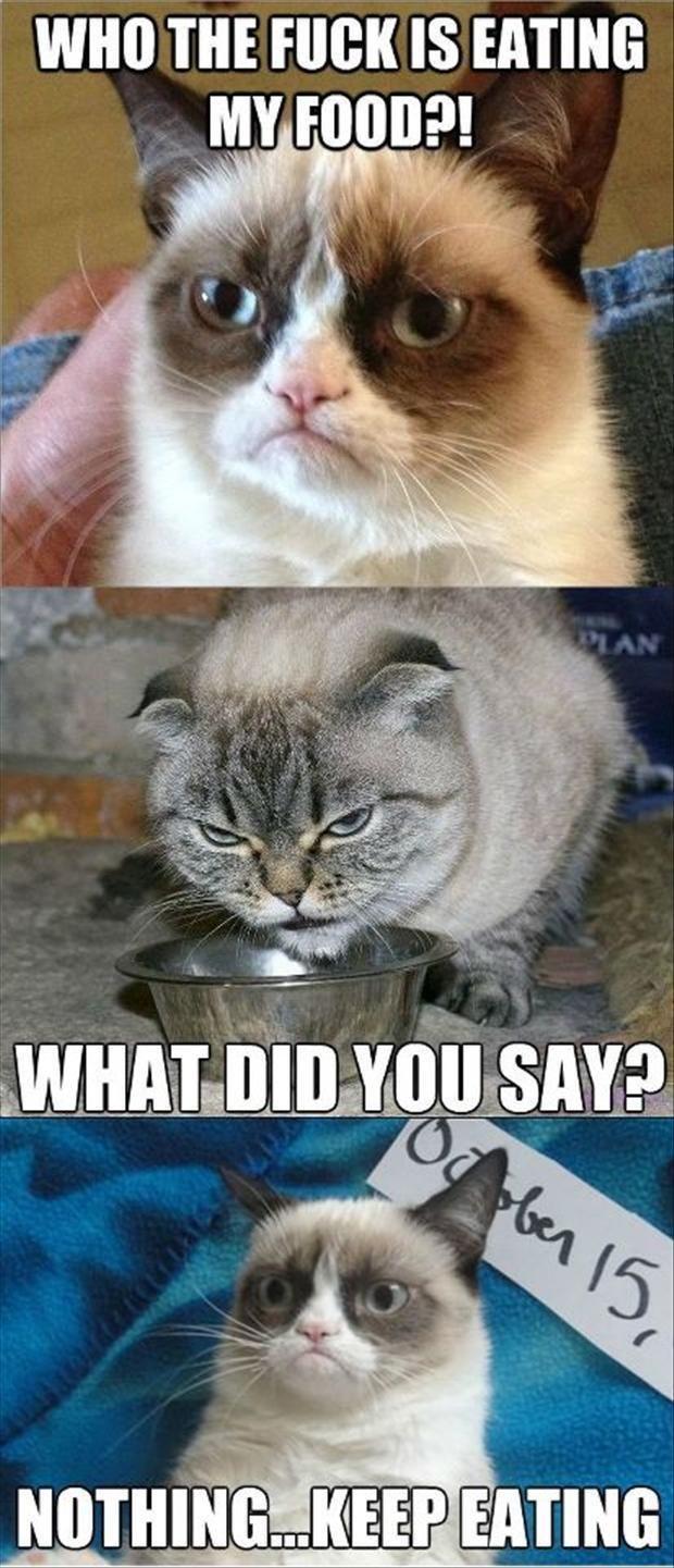 Best of grumpy cat   Katzen memes, Lustige bilder von ...