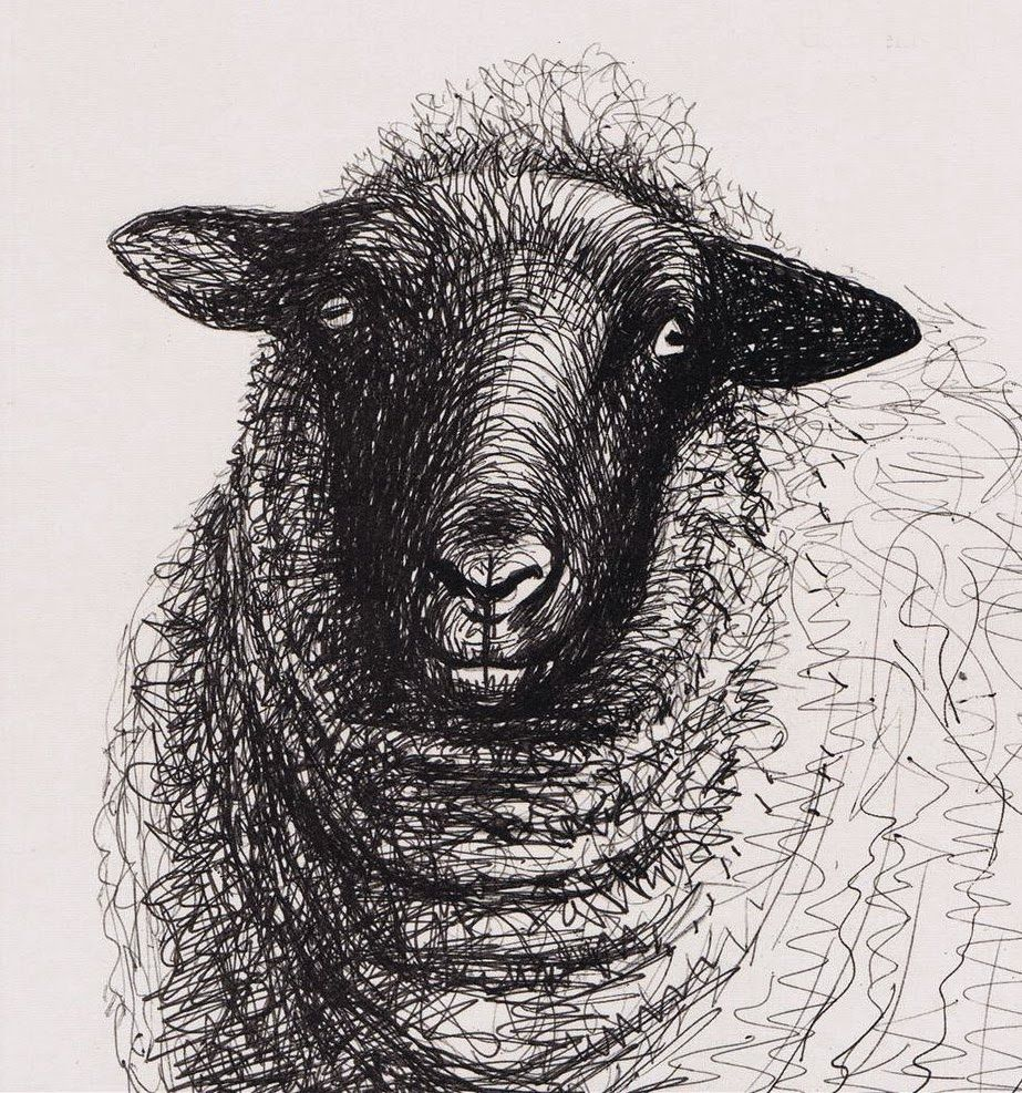 Line Drawing Images Of Sheep : Henry moore sheep drawings google search continuous
