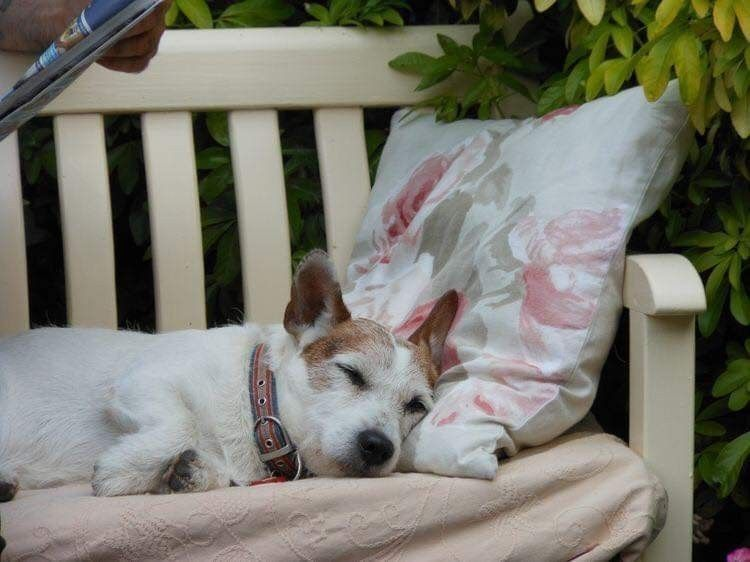 Pin by Judith Peacock on In the Garden Jack russell
