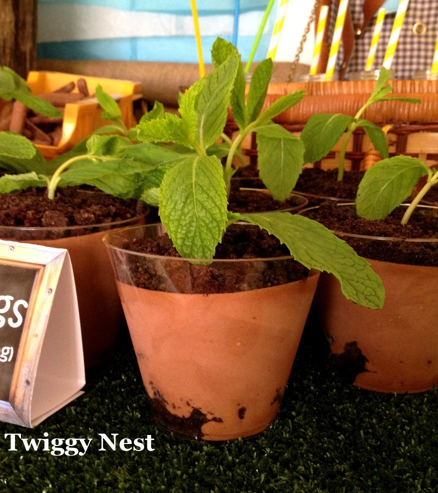 close up seedling... put in small flower pots or mini tin buckets... way cute!