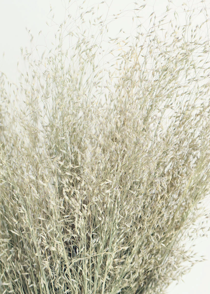 Dried Indian Rice Grass 22 Indian Rice Dried Flowers Grass Centerpiece
