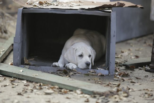 This Heartbreaking Puppy Gif Is The Perfect Teaser For Budweiser S Super Bowl Ad Losing A Dog American Kennel Club Budweiser