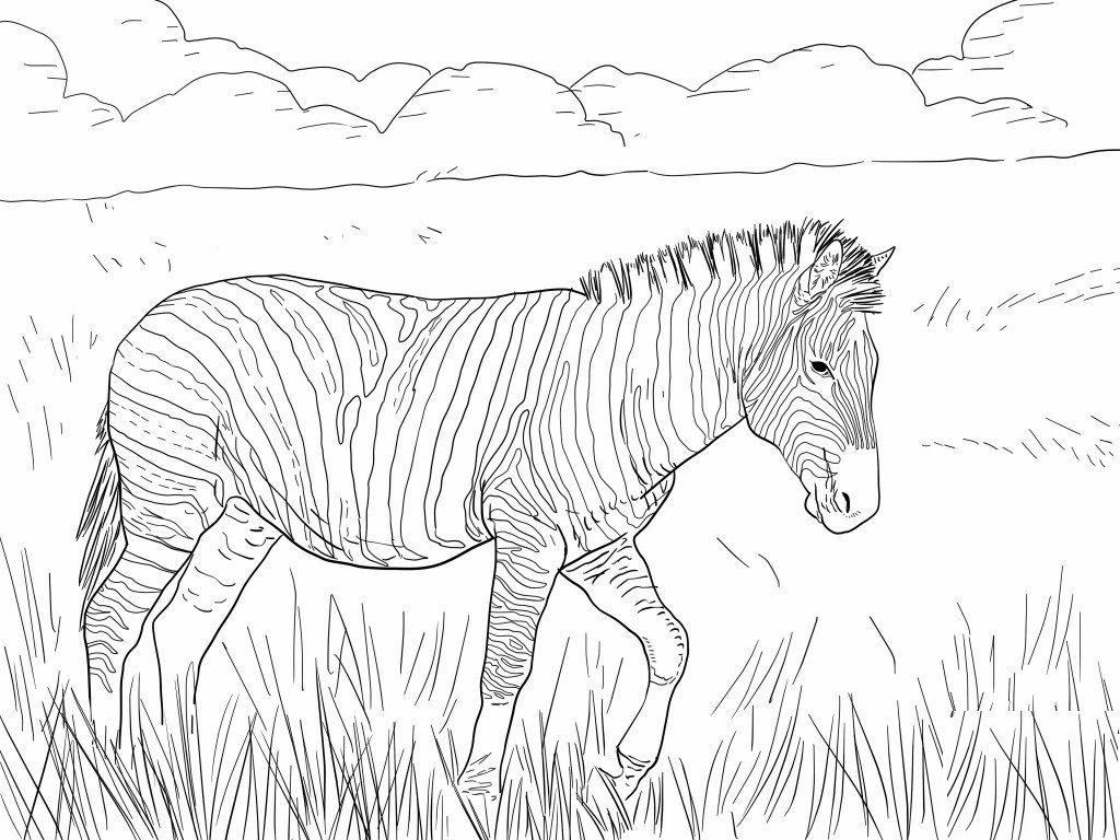 Kolorowanka Piekna Zebra Do Druku Do Wydruku Zebra Coloring Pages Animal Coloring Pages Shark Coloring Pages [ 768 x 1024 Pixel ]