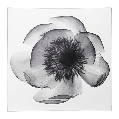 x ray of flowers - Pesquisa Google