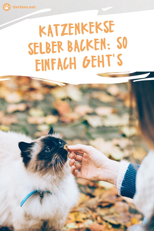 Katzenkekse Selber Backen So Einfach Geht S Katzen Katzen