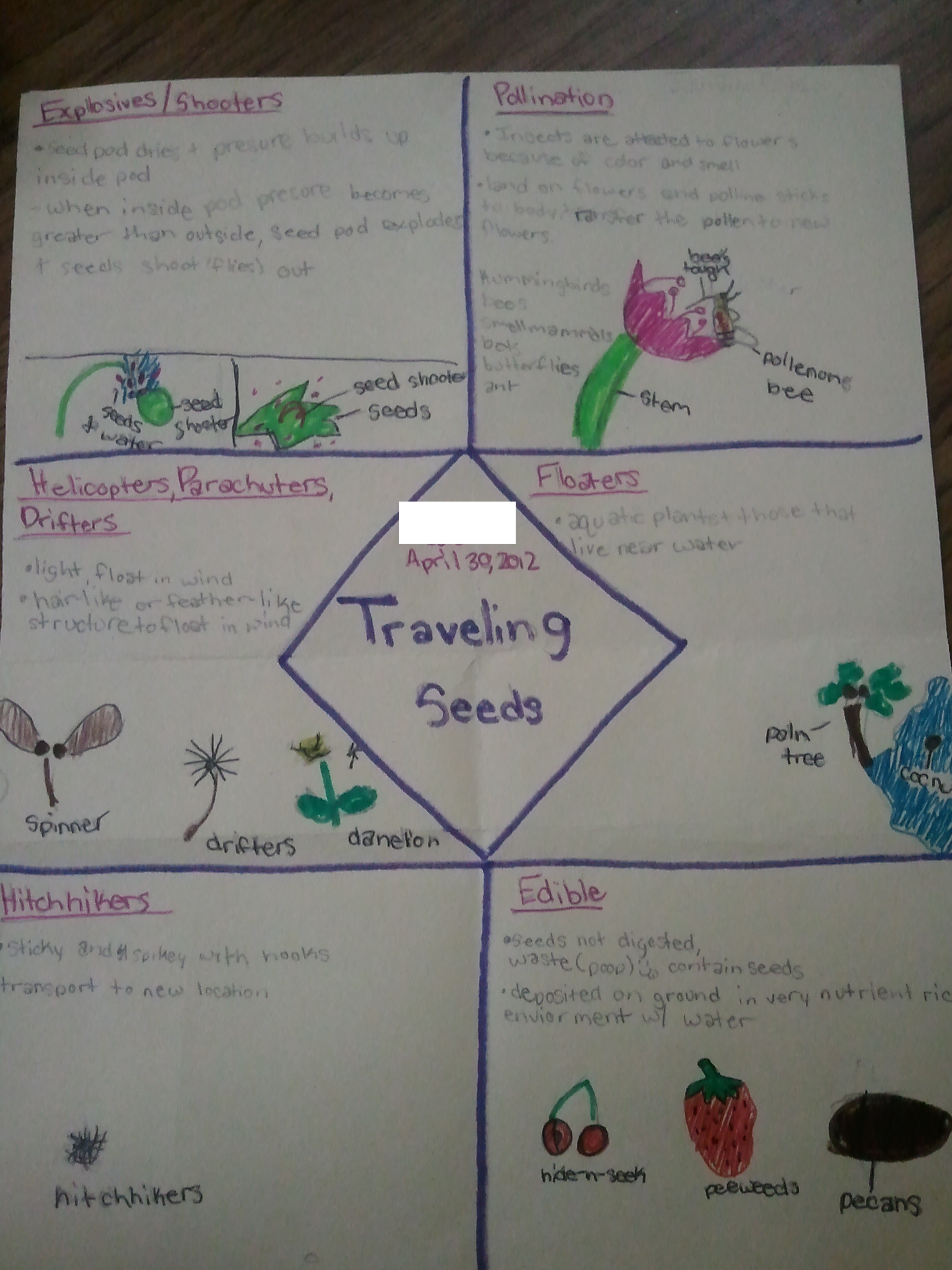 Seed Travel Foldable Science