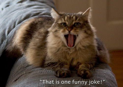 that's one funny joke