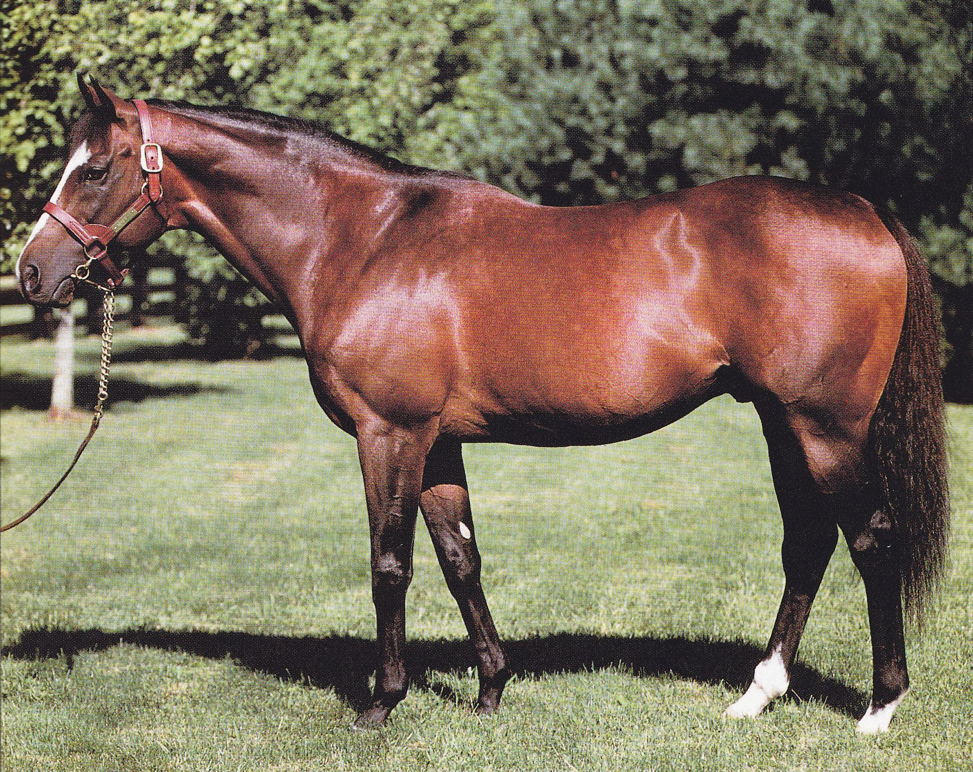 Nureyev. A champion on the track and a champion at stud 1c4618714477