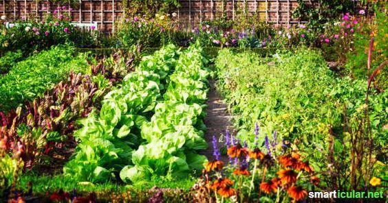 statt insektizid diese pflanzen helfen einander gegen. Black Bedroom Furniture Sets. Home Design Ideas