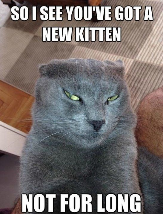 Funny Cat Memes Funny Devious Cat Meme Jokes 2014 Jpg Funny Cat Memes Funny Cats Cats