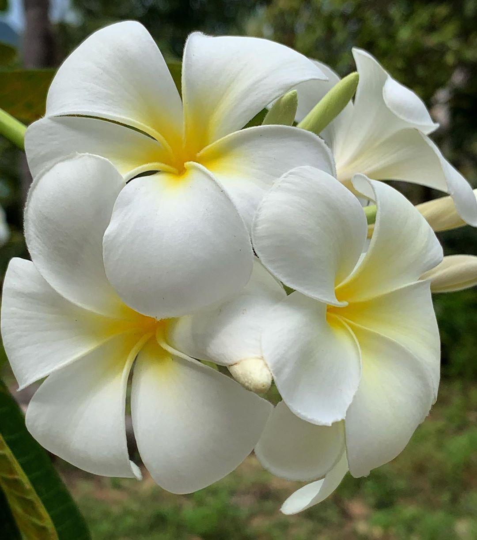 Pin On Kvetiny