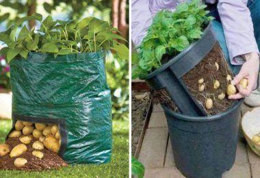 Apprenez à planter du citron dans une tasse et votre ...