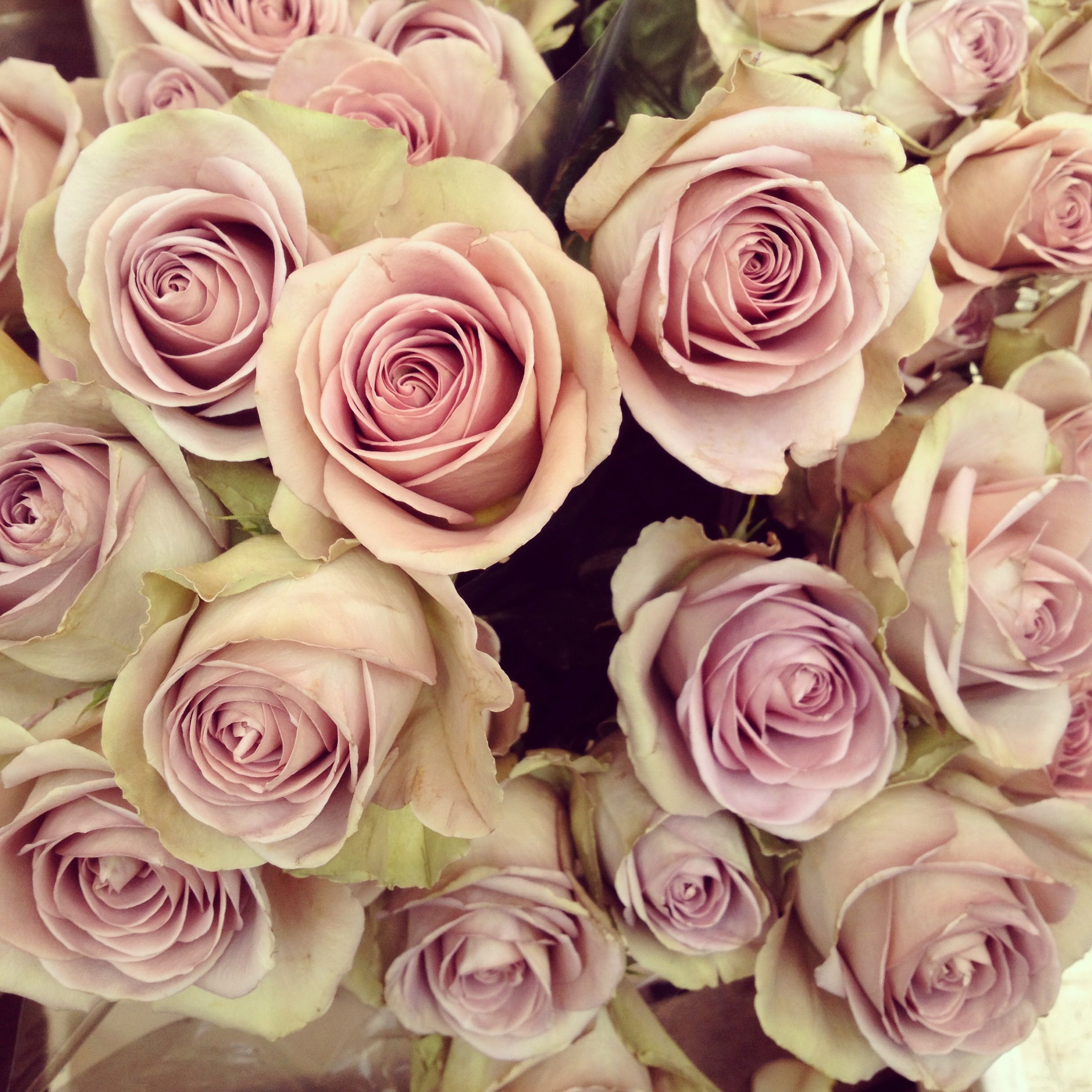Favourite Dusky Pink Roses From Colombia Flower Market Dreaming