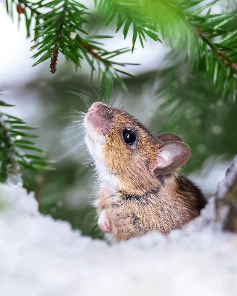 лесные животные фото новогодние индетерминантный