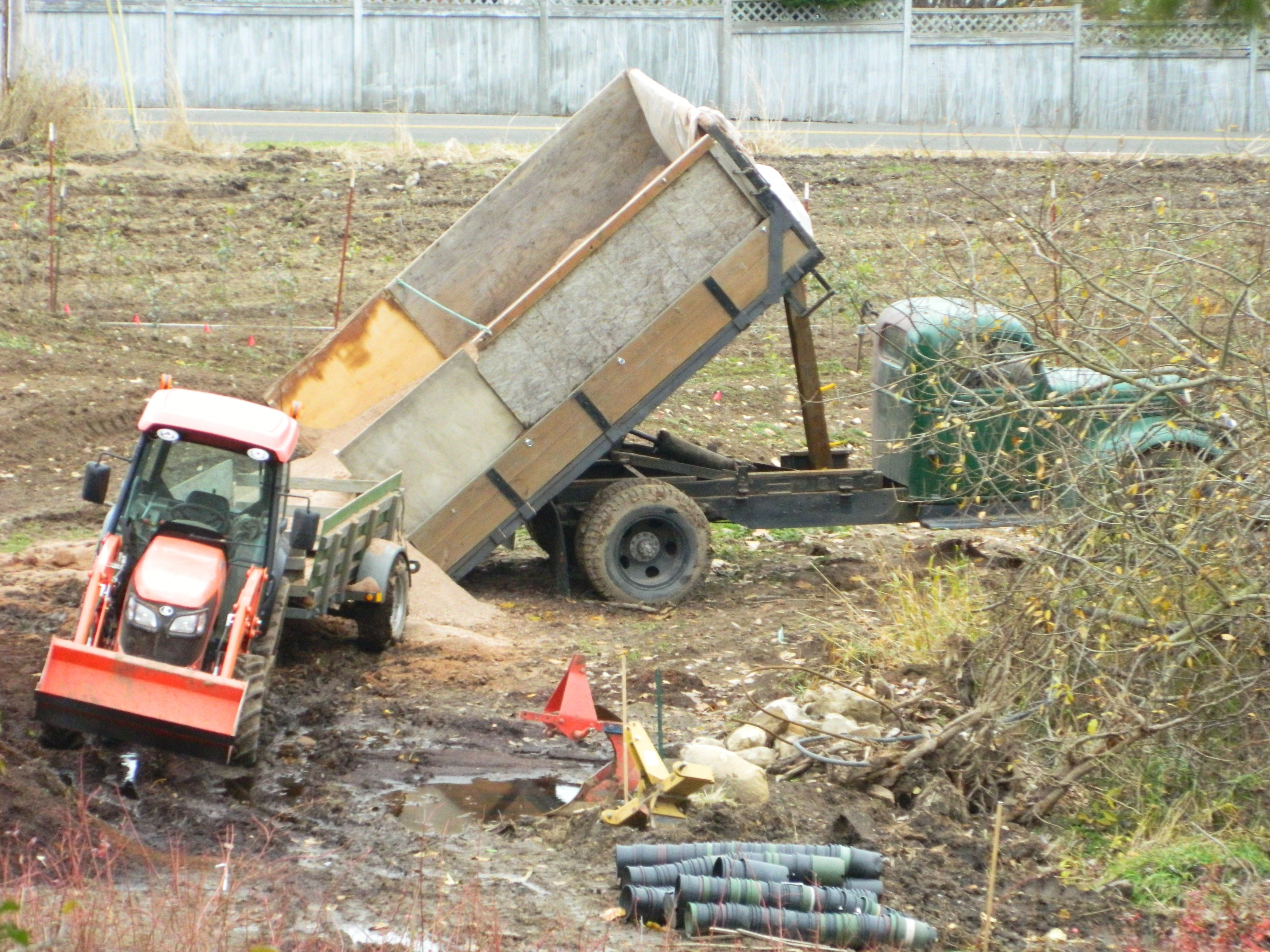 Old dumptruck filled with sawdust. Blueberries love organic material
