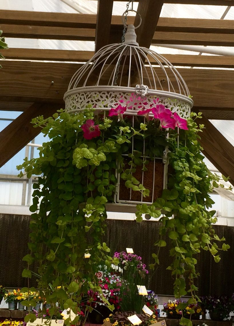Birdcage planter cage of color for those spring vertical gardens birdcage planter cage of color for those spring vertical gardens combination of syngenta flowers sanguna patio pink morning petunia creeping jenny mightylinksfo